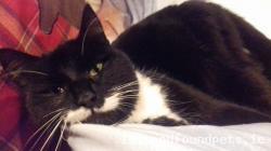 Cat found - Waterford