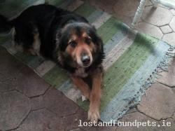 Dog found - Laois