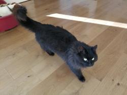 Cat found - Wexford