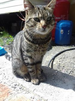 Cat found - Meath