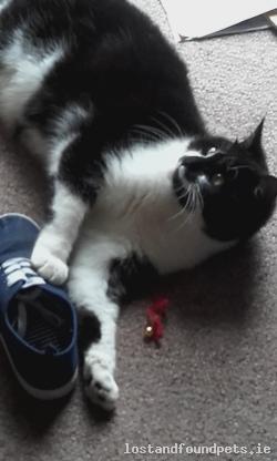 Cat found - Dublin