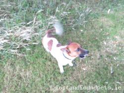 Dog found - Monaghan