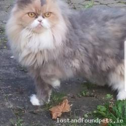 Cat found - Kilkenny