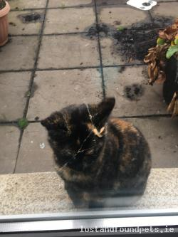 Cat found - Dublin