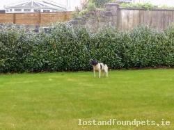 Dog found - Kilkenny