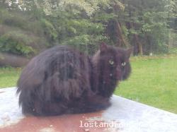 Cat found - Meath