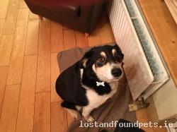 Dog found - Wicklow