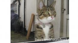 Cat found - Cork