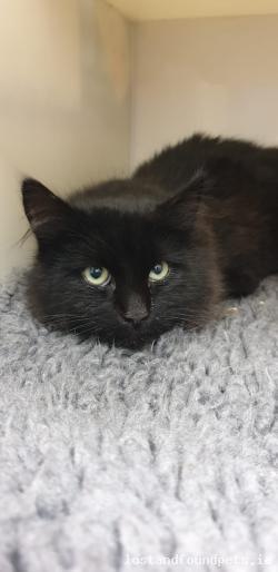 Cat found - Cavan