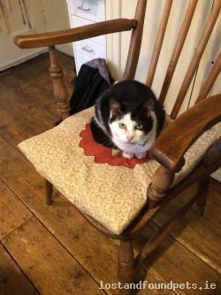 Cat found - Westmeath