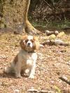 Dog found - Cork