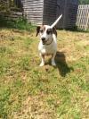 Dog found - Wexford
