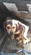 Dog found - Mayo