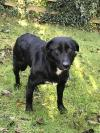 Dog found - Cavan