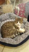 Cat found - Roscommon