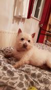 Dog found - Kildare