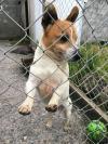 Dog found - Offaly