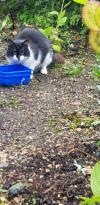 Cat found - Mayo