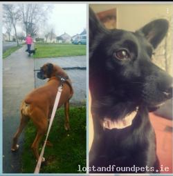 Dog lost - Louth