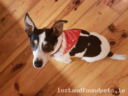 Dog lost - Wicklow