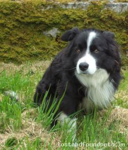 Dog lost - Galway