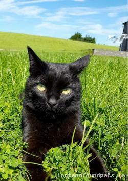 Cat lost - Roscommon