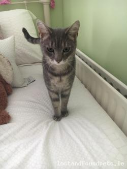 Cat lost - Louth