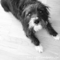Dog lost - Clare