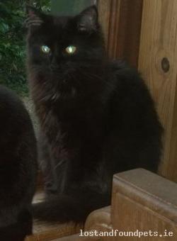 Cat lost - Wicklow