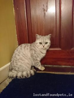 Cat lost - Monaghan