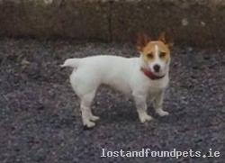 Dog lost - Sligo