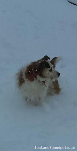 Dog lost - Cork