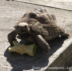 Reptile lost - Sligo