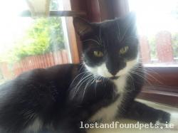 Cat lost - Carlow