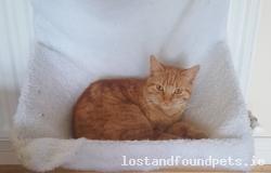 Cat lost - Laois
