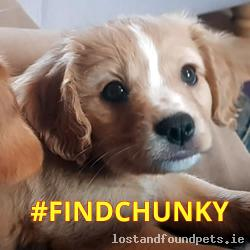 Dog lost - Kerry