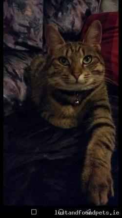 Cat lost - Waterford