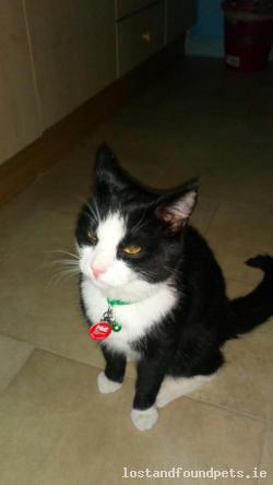 Cat lost - Mayo