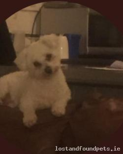 Dog lost - Meath