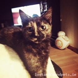 Cat lost - Sligo