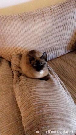 Cat lost - Antrim