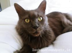 Cat lost - Cork