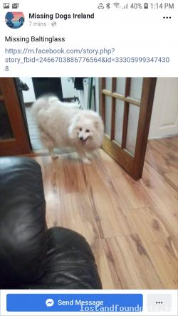 Dog lost - Wicklow