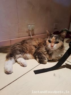 Cat lost - Dublin