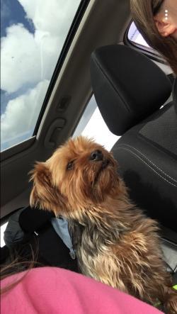 Dog lost - Roscommon