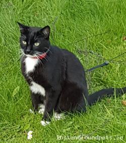 Cat lost - Dublin