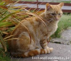 Cat lost - Kerry