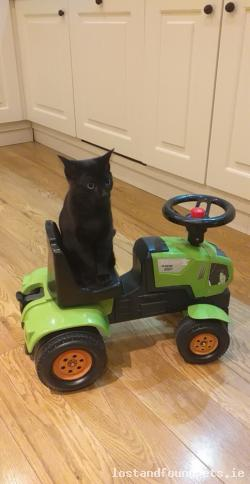 Cat lost - Offaly