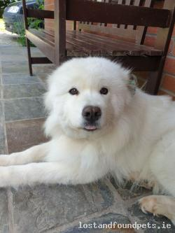 Dog lost - Wexford