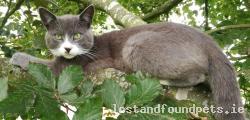Cat lost - Kilkenny